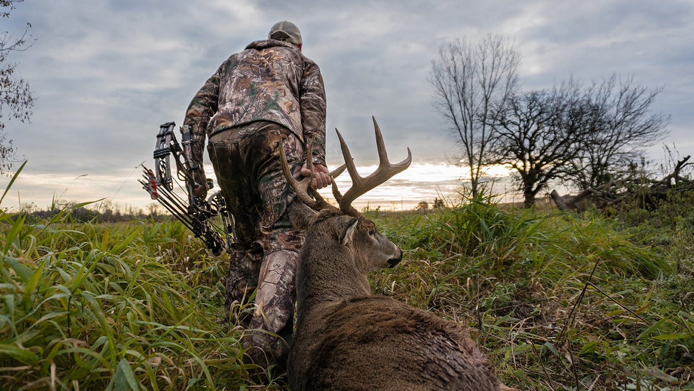 Bowhunter dragging out a large deer.
