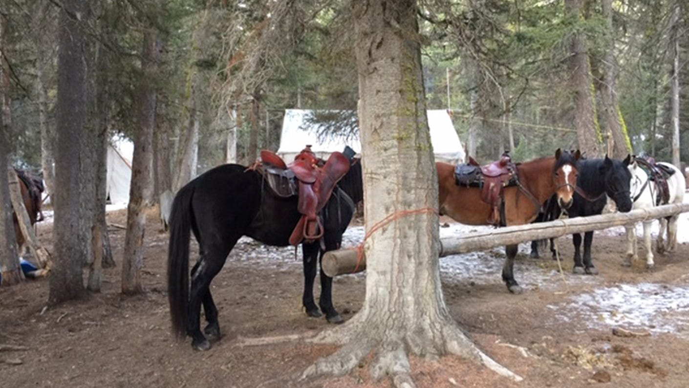 Guided hunt outfitting horses with gear